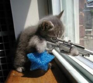 cose da non fare al gatto